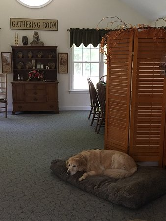 Holland, MA: Zeets lounging at Restful Paws!