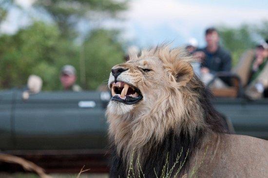 NYATI Safari Lodge: NYATI Big 5 Safari