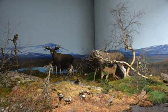 أوبسالا, السويد: Eine der Naturszenen im Biotopia (Ausschnitt)