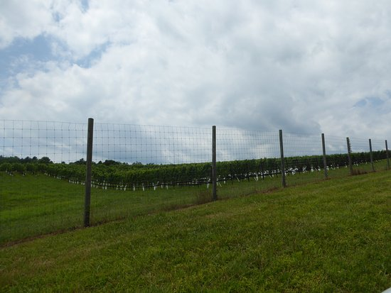 Upperville, VA: Vines