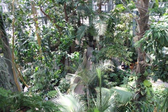 United States Botanic Garden: hlavní skleník