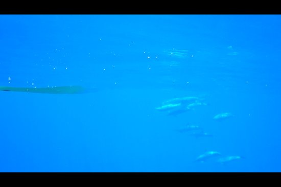 Kona Boys: An underwater picture of the dolphins swimming with us as we kayaked.