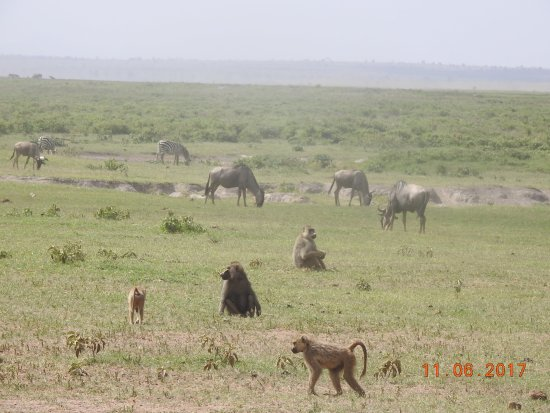 Amboseli National Park Picture