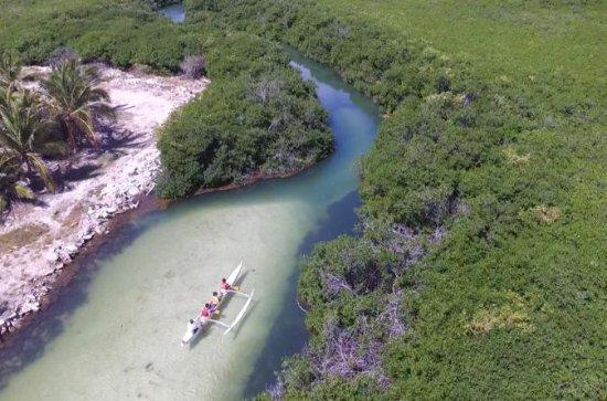 Mangrove Kayak Ecotour fra Galion...