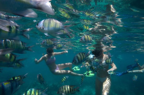 Snorkel Tour to Koh Phi Phi by Speed ...