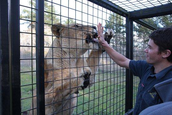 Orana Wildlife Park: Feeding time.