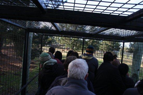 Orana Wildlife Park: Inside the truck cage.