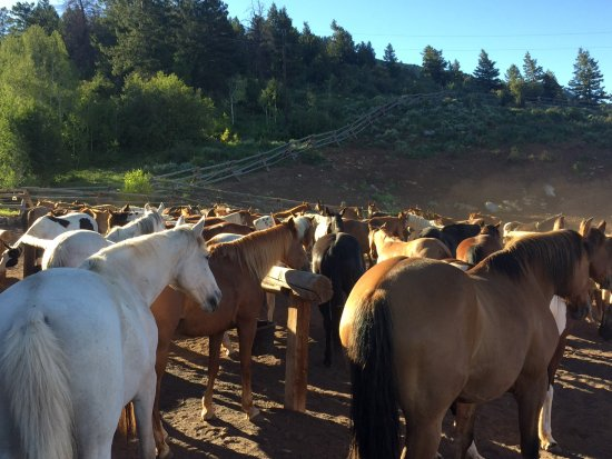Mc Coy, CO: Ranch horses getting ready for the day