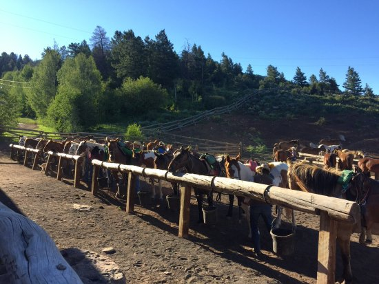 Mc Coy, CO: Horses saddled up and ready to go