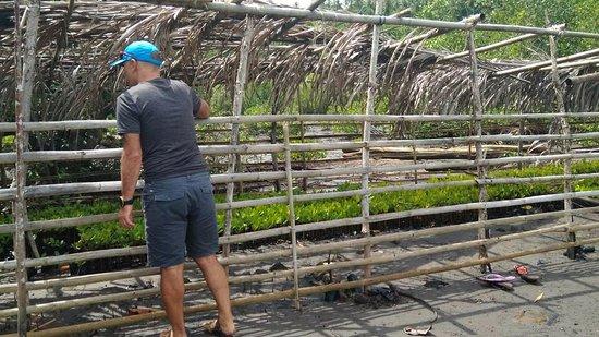 Manado Indonesia Mangrove Nurseries Area