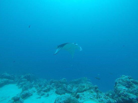 Fish 'n Fins Palau: photo1.jpg