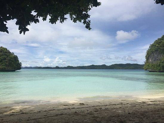 Fish 'n Fins Palau: photo2.jpg
