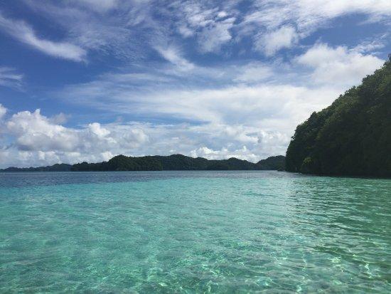 Fish 'n Fins Palau: photo4.jpg