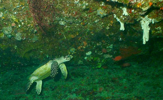 Fish 'n Fins Palau: photo5.jpg