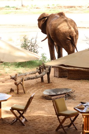 Elephant Bedroom Camp Updated 2018 Prices Reviews Photos Kenya Samburu National Reserve