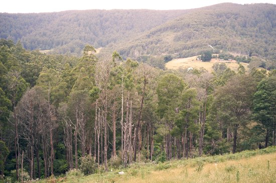 Yarra Valley, Australie : View from Mt View cottage