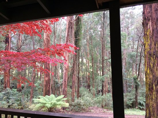 Yarra Valley, Australia: Autumn view from the cottage balcony