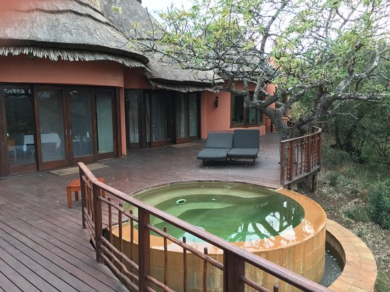 Thanda Safari : Pool with a view.