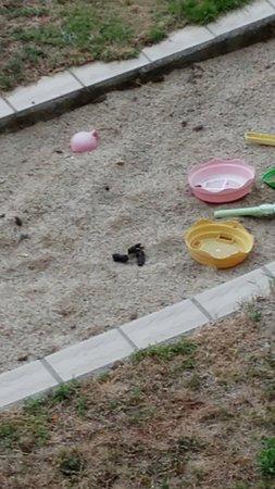Evisa, Frankrig: Defecazione di cane tra i giochi dei bambini....