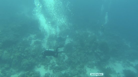 JADS Dive Center: Jane Sea Wreck (roughly 90 feet down)