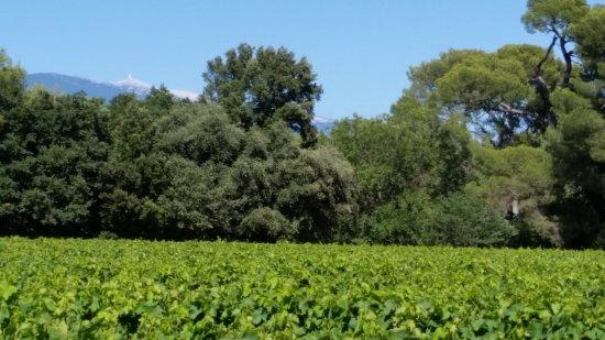 Aubignan, France: View