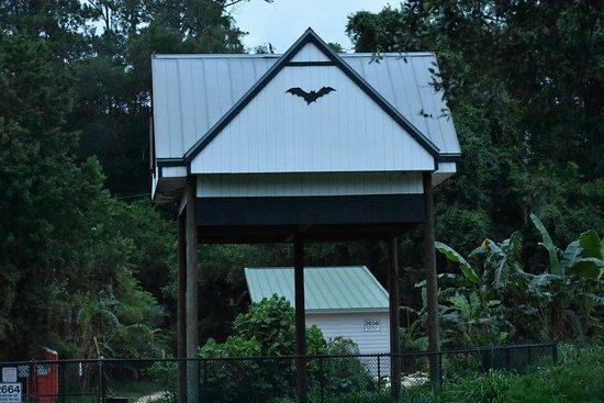 Gainesville, FL: The Bats' House