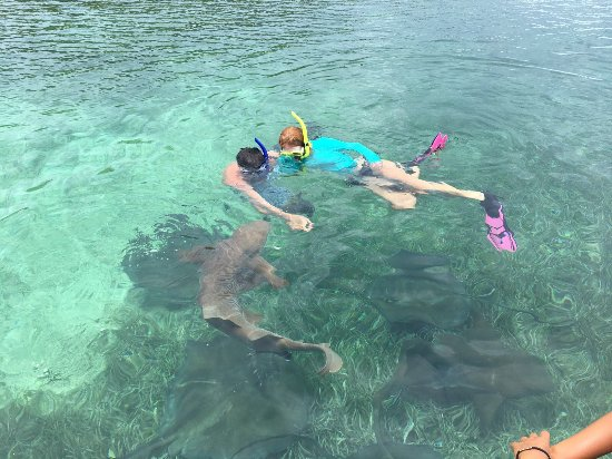 Brendal's Dive Center: Swimming with nurse sharks and Rays
