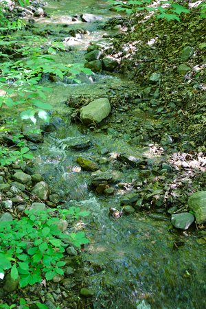 Columbia, Nueva Jersey: Streams
