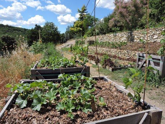 Simiane-la-Rotonde, France: l'orto in fase di recupero