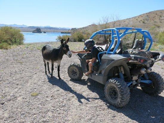 Dolan Springs, AZ: getlstd_property_photo