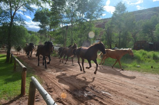 The Lazy L&B Ranch : Horses heading to pasture
