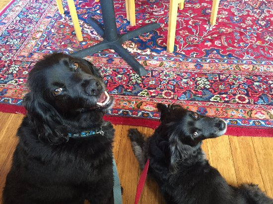 Stanford Inn by the Sea: Pet-Friendly Dining Area
