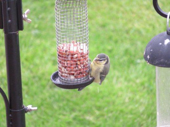 Dores, UK: Birdfeeders
