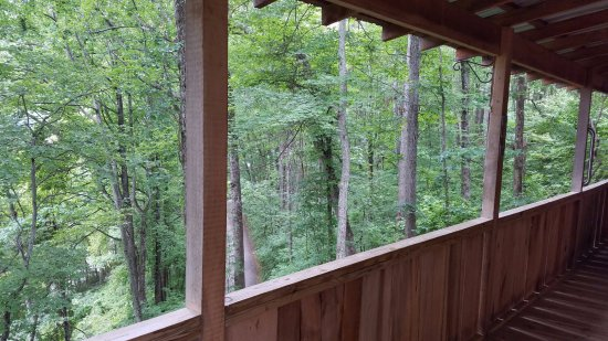 Candler, NC: Nothing but nature! Imagine this in the fall!