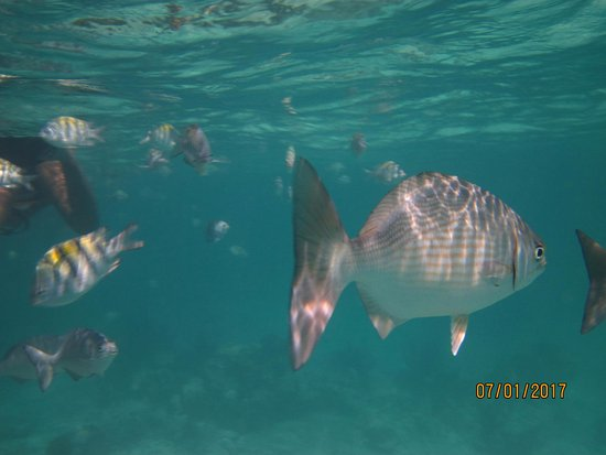 Snorkeling Adventures: Amazing colors