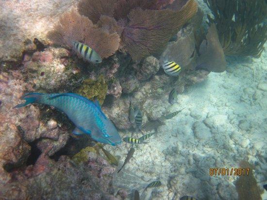 Snorkeling Adventures: Amazing fishes