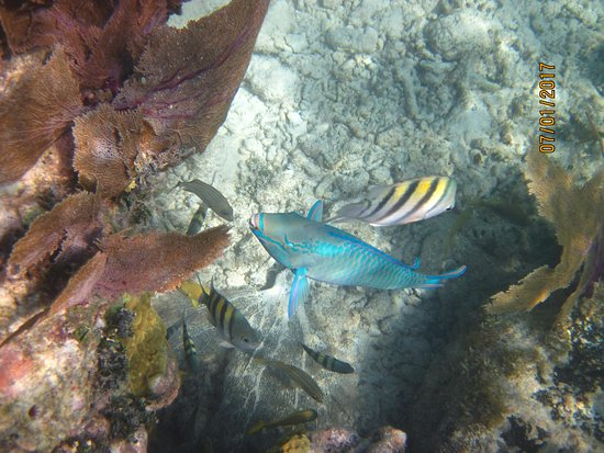 Snorkeling Adventures: Look at that corral!