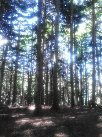 Emilia-Romagna, Italy: un bellissimo bosco nei pressi di Chiapporato....