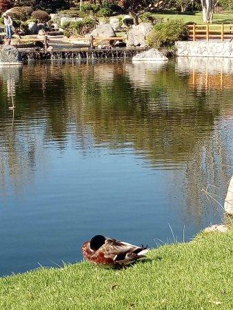 Fuentes De Agua Del Jardin Japones Picture Of Jardin Del Corazon - Fuentes-agua-jardin