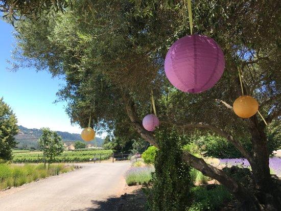 Pretty lanterns at Matanzas Creek Winery