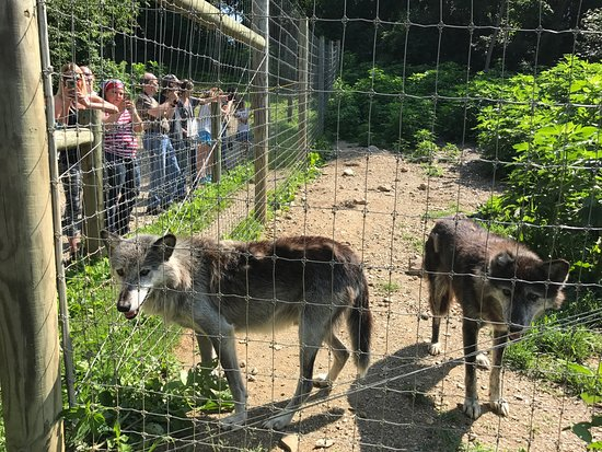 Wolf Sanctuary of PA: photo0.jpg