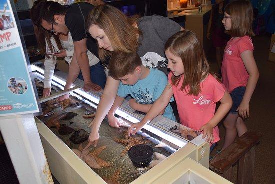 Santa Monica Pier Aquarium: touch tank