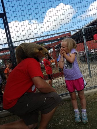 Forney, TX: Check Manny the Coatimundi at The Gentle Zoo!!