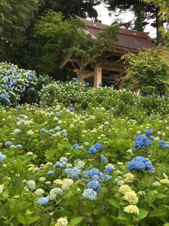 Unsho-ji Temple