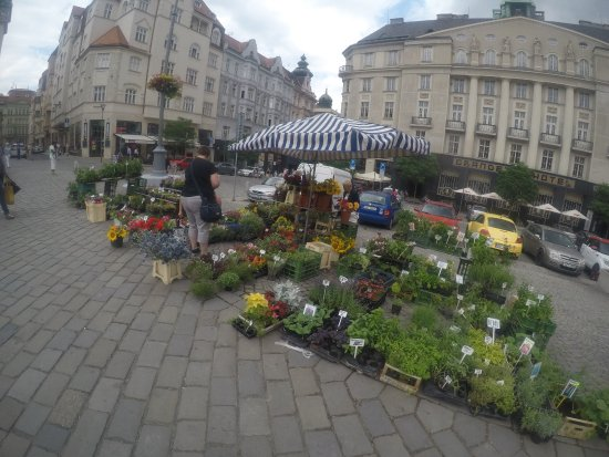 Brno, República Checa: Locals are selling veggies and plants