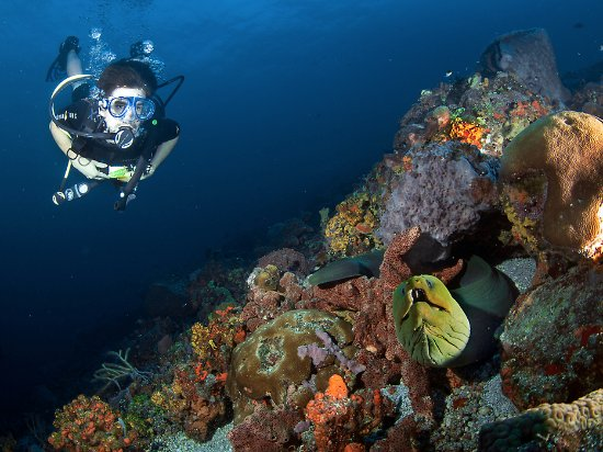Speyside, Tobago: The diving in front of the resort