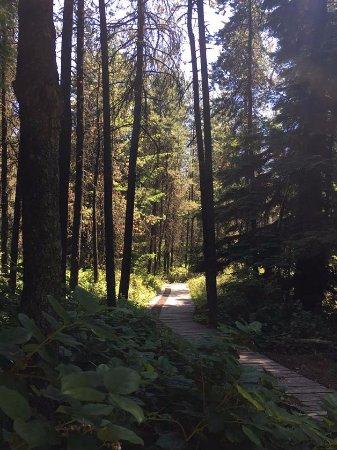 Delta, Canadá: Trees
