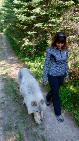 Голден, Канада: Walking alongside wolves