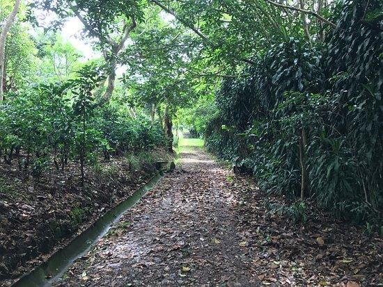 Finca Rosa Blanca Coffee Plantation & Inn: photo0.jpg
