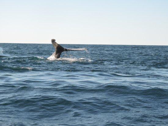 Manly Ocean Adventures Photo